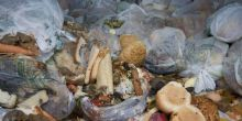 bags of food waste