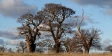 talk in Shrewsbury on ancient oak trees