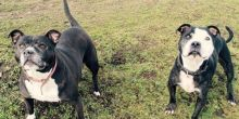 finding-furever-homes-annie-and-kane-looking-for-a-new-home