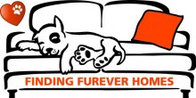 finding-furever-homes-k9-capers