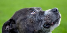 finding-furever-homes-orphan-annie-dog-rescue-shropshire-jolly-good-causes