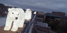 Polar bears on the roof at Morris and Company in Shrewsbury