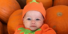 Poppy the Pumpkin and friends