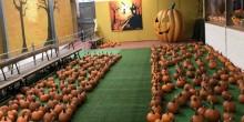 Pumpkin Alley