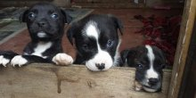 finding-furever-homes-shropshire-rescue-has-26-pups-in-need-of-homes-jolly-good-causes