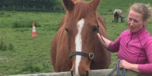Scarlet a horse who is looking for a home with Totem Horses