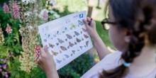 Vivara Sponsors Big Butterfly Count 2021