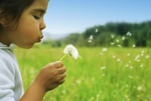 Child blowing dandelions
